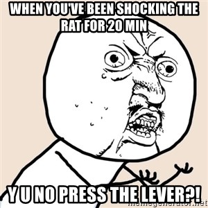 Y U No - When you've been shocking the rat for 20 min y u no press the lever?!