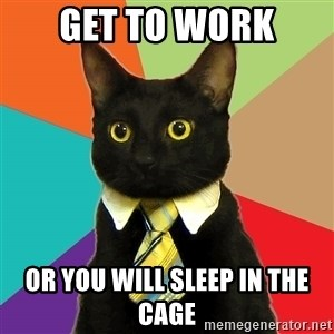 Business Cat - GET TO WORK or you will sleep in the cage