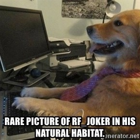 I have no idea what I'm doing - Dog with Tie - Rare Picture of RF_Joker in his natural habitat.