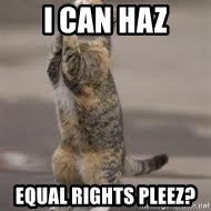 Begging Cat - I can haz Equal rights pleez?