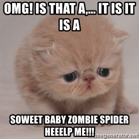 Super Sad Cat - Omg! Is that a,... it is it is a  Soweet baby zombie spider HEEELP ME!!!