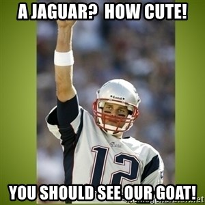tom brady - A jaguar?  How cute! You should see our goat!