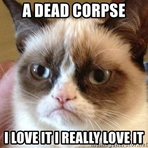 Angry Cat Meme - a dead corpse  i love it i really love it