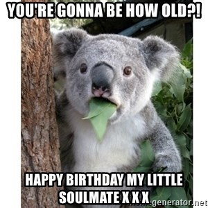 surprised koala - You're gonna be how old?! Happy birthday my little soulmate x x x