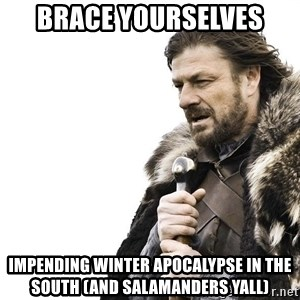 Winter is Coming - Brace yourselves  Impending winter apocalypse in the south (and salamanders yall)