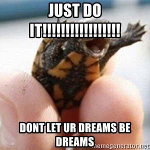 angry turtle - JUST DO IT!!!!!!!!!!!!!!!!! Dont let ur dreams be dreams