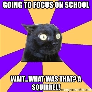 Anxiety Cat - Going to focus on school Wait...what was that? A squirrel!