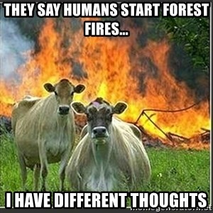 Evil Cows - They say humans start forest fires... I have different thoughts