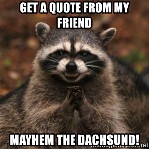 evil raccoon - Get a quote from my friend Mayhem the Dachsund!