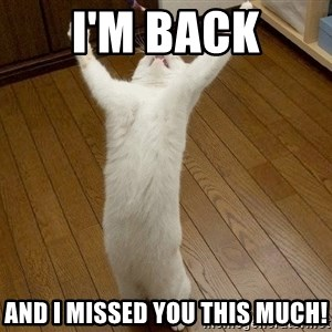 praise the lord cat - i'm back and I missed you this much!