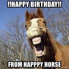 Horse - !!Happy birthday!! from happpy horse