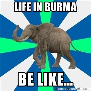 PTSD Elephant - life in burma be like...