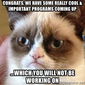 Angry Cat Meme - Congrats, we have some really cool & important programs coming up ...which you will not be working on