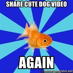 Absentminded Goldfish - share cute dog video again