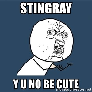 Y U No - stingray Y U no be cute