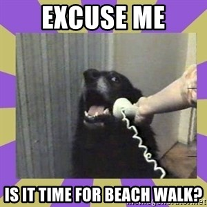 Yes, this is dog! - EXCUSE ME Is it time for beach walk?