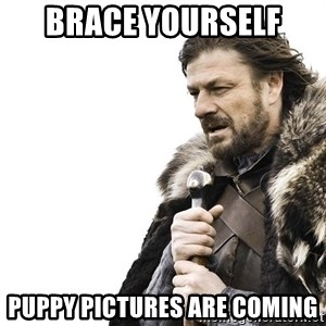 Winter is Coming - Brace yourself  Puppy pictures are coming