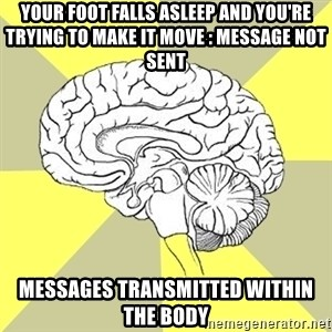 Traitor Brain - your foot falls asleep and you're trying to make it move : message not sent messages transmitted within the body