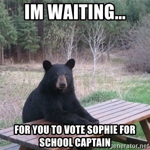 Patient Bear - im waiting... for you to vote sophie for school captain