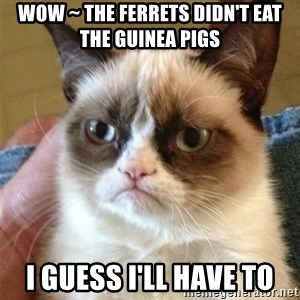 Grumpy Cat  - Wow ~ the ferrets didn't eat the guinea pigs I guess I'll have to