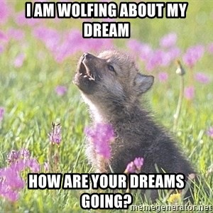 Baby Insanity Wolf - I am wolfing about my dream how are your dreams going?