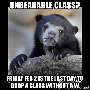 sad bear - unbearable class? Friday Feb 2 is the last day to drop a class without a W