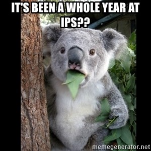 Koala can't believe it - It's been a whole year at IPS??