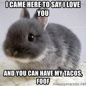 ADHD Bunny - i came here to say I love you and you can have my tacos, Foof
