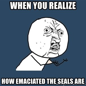 Y U No - when you realize  how emaciated the seals are