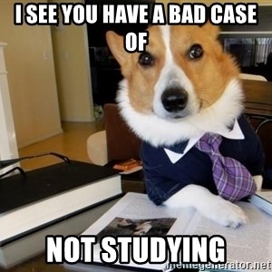 Dog Lawyer - I see you have a bad case of Not studying