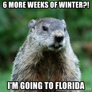 grumpy groundhog - 6 more weeks of winter?! I'm going to Florida