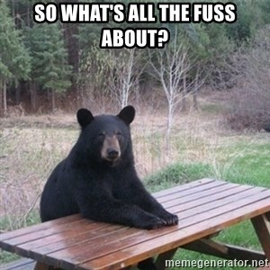 Patient Bear - So what's all the fuss about?