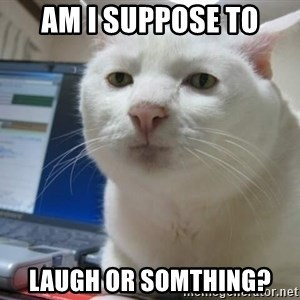 Serious Cat - Am I suppose to laugh or somthing?