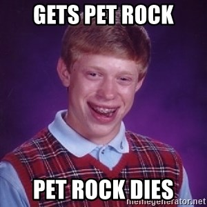 Bad Luck Brian - Gets pet rock pet rock dies