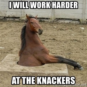 Hole Horse - I will work harder at the knackers