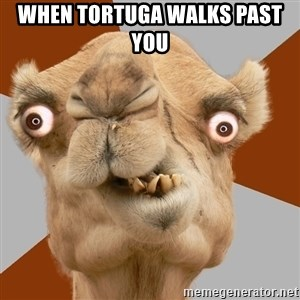 Crazy Camel lol - When Tortuga walks past you
