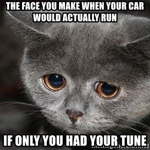sad cat - the face you make when your car would actually run if only you had your tune