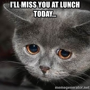sad cat - I'll miss you at lunch today...