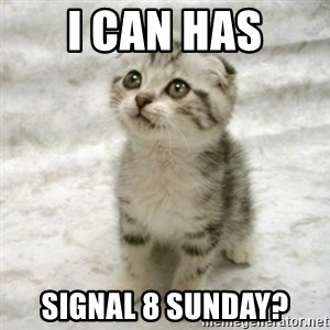 Can haz cat - I can has Signal 8 Sunday?
