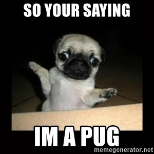 Confused Pug - so your saying im a pug
