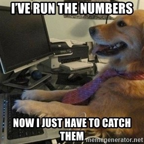 I have no idea what I'm doing - Dog with Tie - I've run the numbers  Now I just have to catch them
