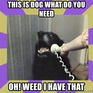 Yes, this is dog! - this is dog what do you need oh! weed i have that
