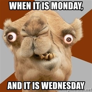Crazy Camel lol - When it is Monday,  And it is Wednesday