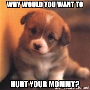 cute puppy - why would you want to hurt your mommy?
