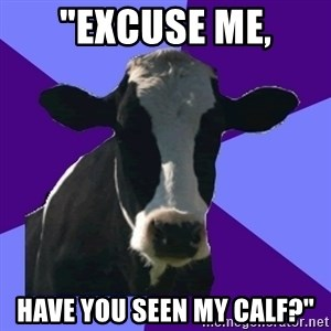 "Coworker Cow - ""Excuse me, Have you seen my calf?"""