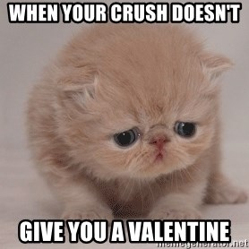 Super Sad Cat - when your crush doesn't  give you a valentine