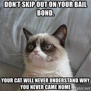 Grumpy cat good - Don't skip out on your bail bond. Your cat will never understand why you never came home