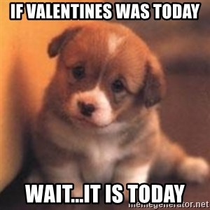 cute puppy - IF VALENTINES WAS TODAY Wait...It is today