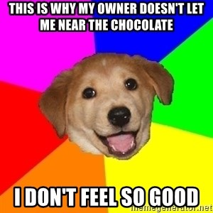 Advice Dog - this is why my owner doesn't let me near the chocolate  i don't feel so good