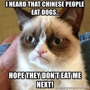 Grumpy Cat  - I heard that Chinese people eat dogs.. Hope they don't eat me next!